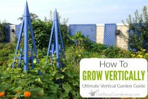 Growing Vertically: The Ultimate Vertical Garden Guide