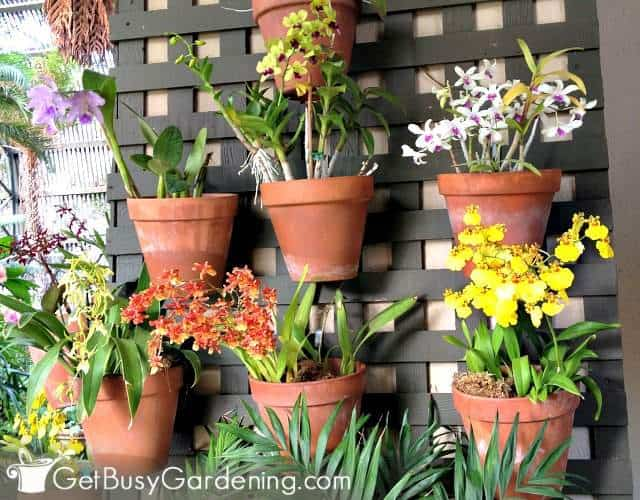 Orchids are gorgeous plants suitable for vertical gardens