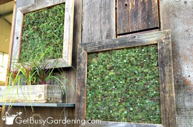 Succulents are ideal plants for vertical gardens