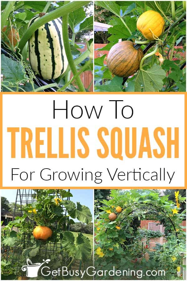 How To Trellis Squash For Growing Vertically