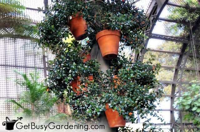Use small plants to grow in a vertical garden