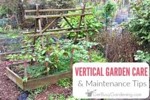 Vertical Garden Maintenance & Care Tips