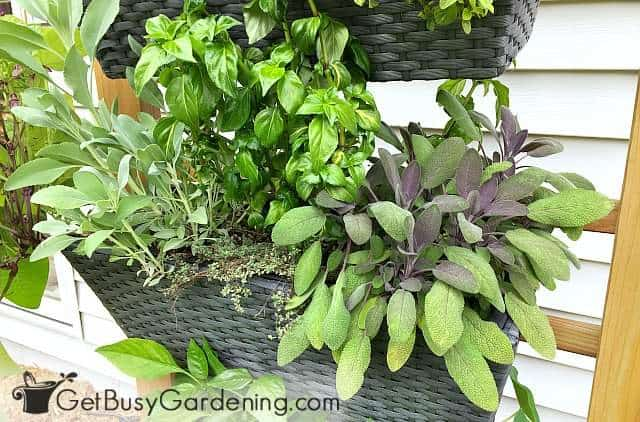 Vertical gardens are easier to maintain