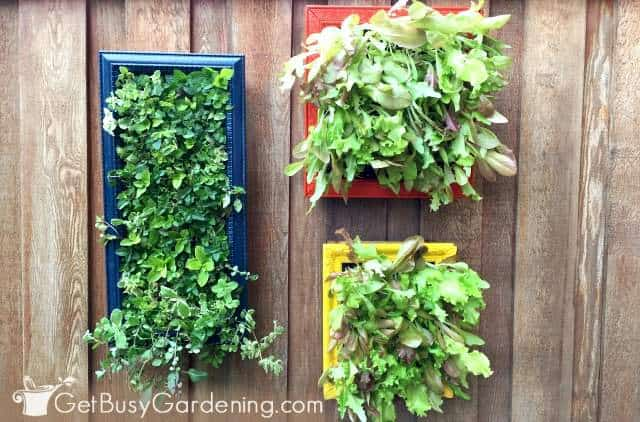 Vertical living wall art made from old picture frames