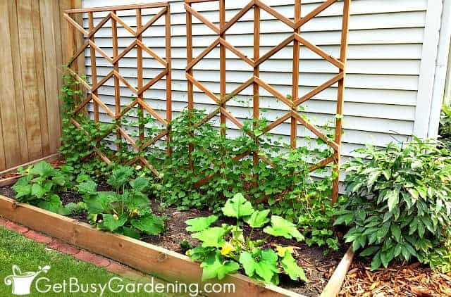 A simple garden to start growing vegetables