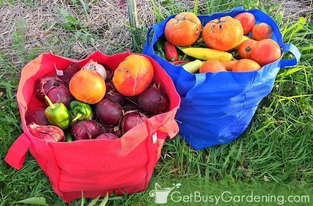 Bags of food harvested from a successful vegetable garden