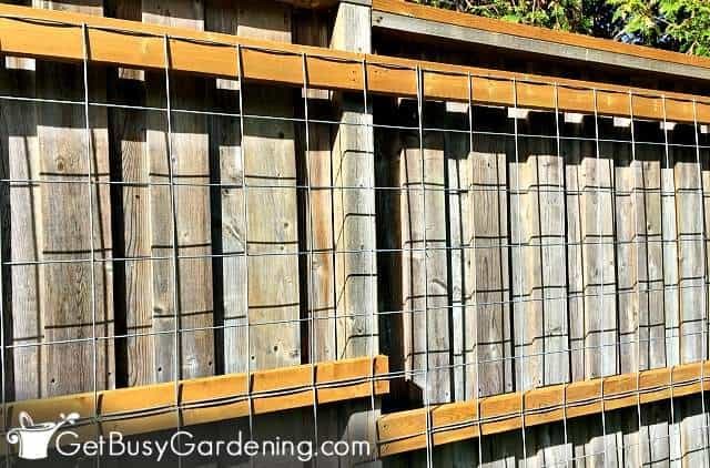 Cattle panel is an excellent garden trellis material