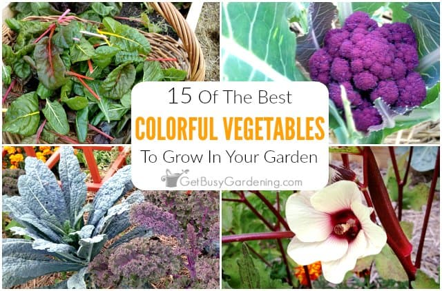 15 Colorful Vegetables To Grow In Your Garden