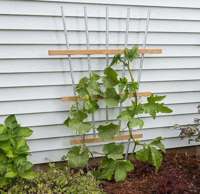 Vertical garden idea #14- DIY pipe fan trellis support