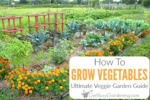 Growing Vegetables: The Ultimate Vegetable Garden Guide