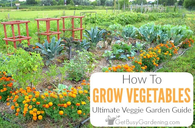 Growing Vegetables The Ultimate Veggie Garden Guide Get Busy