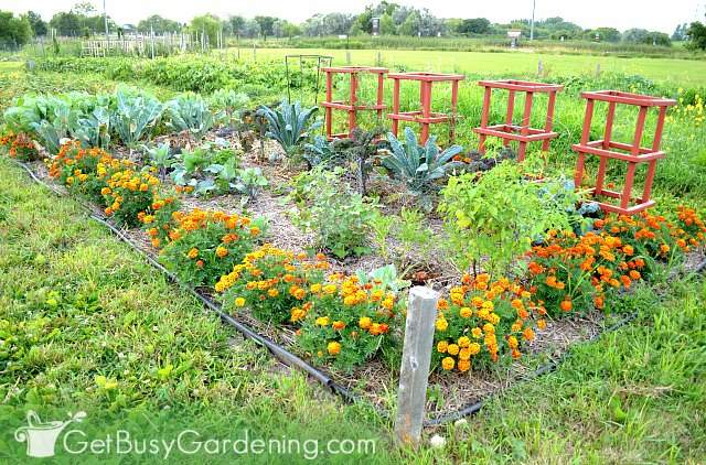 My colorful vegetable garden plot