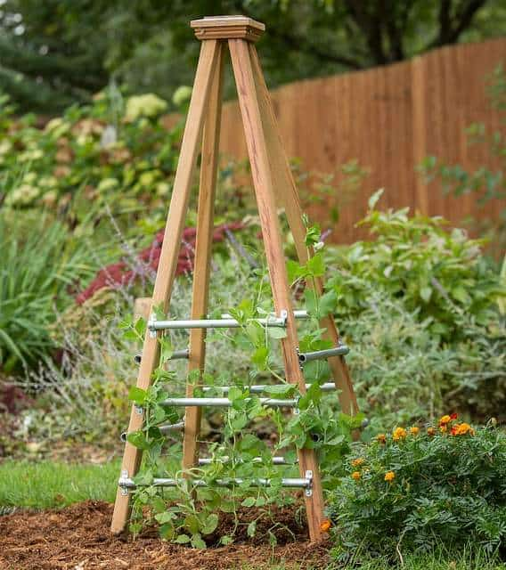 Vertical garden idea #12- Obelisk trellis vertical growing structure with vines on it