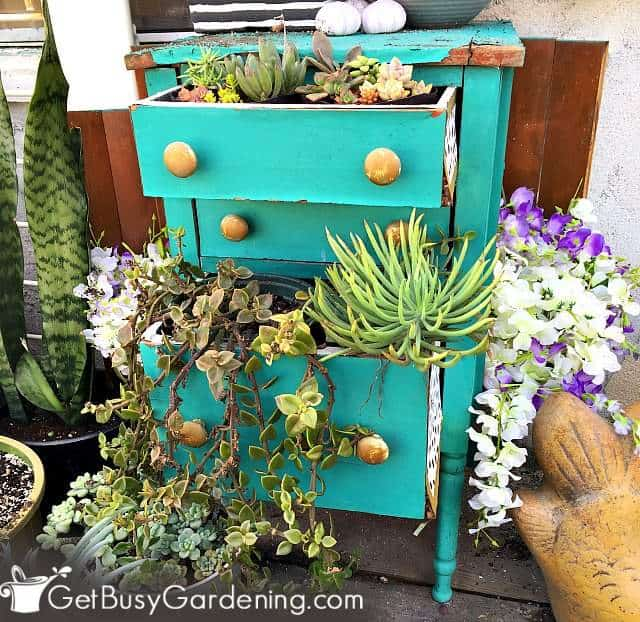Old furniture can be repurposed for creating vertical gardens