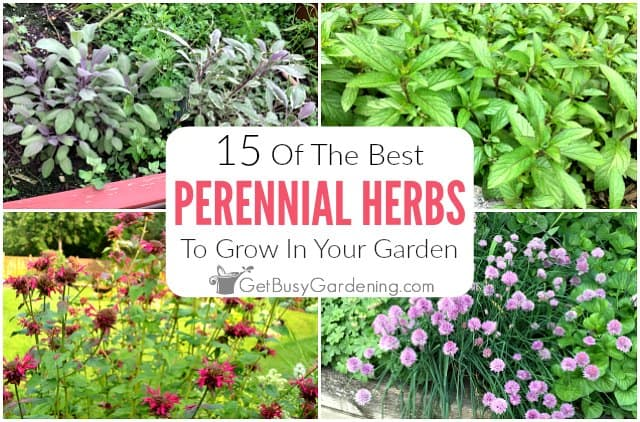 15 Perennial Herbs To Grow In Your Garden