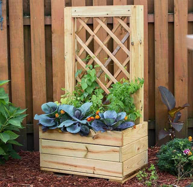 Vertical garden idea #8- Planter box with climbing vines on the trellis