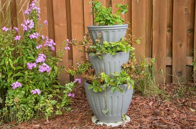 Vertical garden idea #7- Stacked pots vertical tower garden filled with berry plants