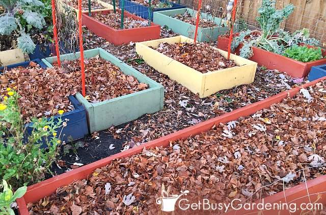 Using leaf mulch for vegetable garden beds