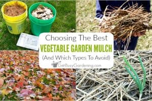 Choosing The Best Mulch For Vegetable Gardens