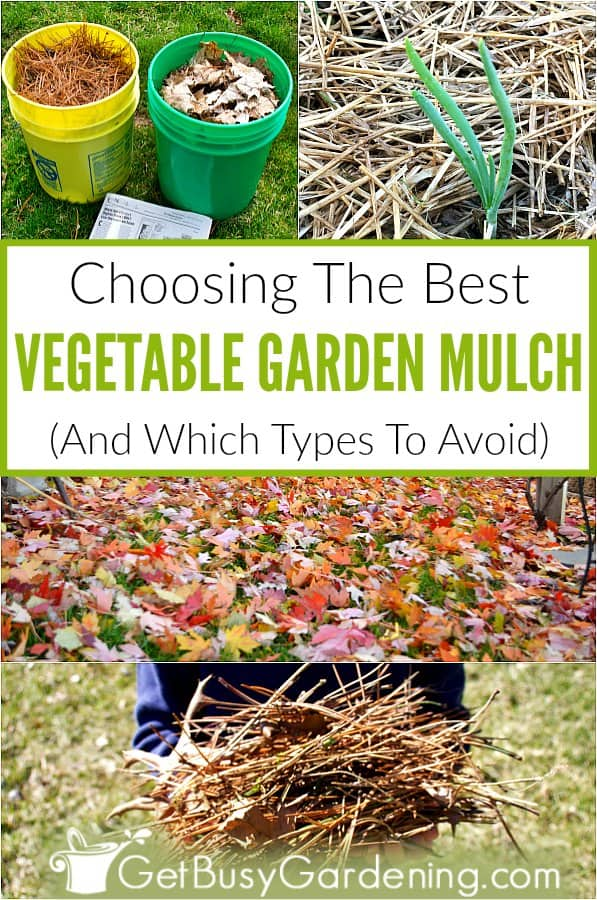 There are tons of different types of mulches. But many are for landscapes, and not good for a vegetable plot. When it comes to mulching vegetable garden beds, you should always choose a lightweight, organic material, like compost, straw, hay, or leaves. You can even find many of these materials in your backyard for free. Learn all about the different types of mulches, pros and cons to each, which ones to avoid, and get tips for choosing what's best for your veggies.
