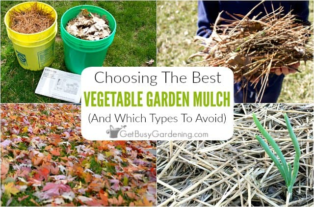 Choosing The Best Mulch For Vegetable Gardens Get Busy Gardening