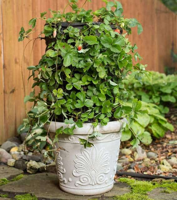 Vertical garden idea #11- DIY vertical strawberry tower garden planter