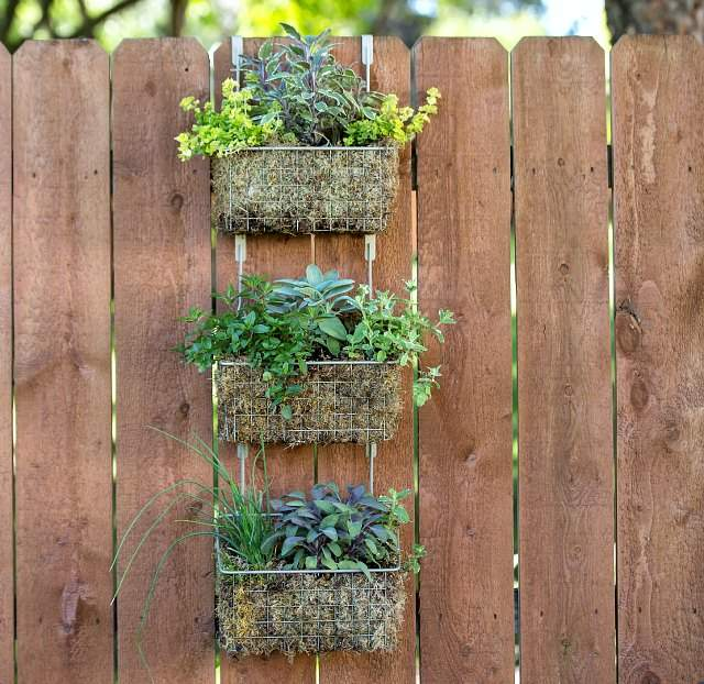 Wall mounted vertical gardens with colorful herbs growing in them