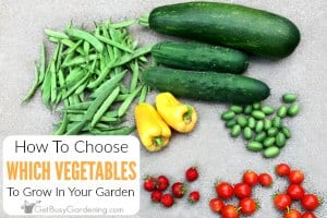 How To Decide What To Plant In A Vegetable Garden
