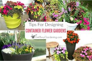 Container Flower Gardening Design Tips & Ideas