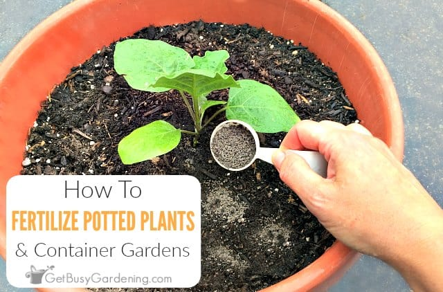 How To Fertilize Outdoor Potted Plants