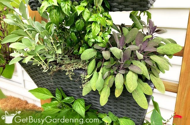 Choosing The Best Potting Soil Mix For Container Gardening Get