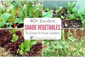 40+ Vegetables That Grow In Shade