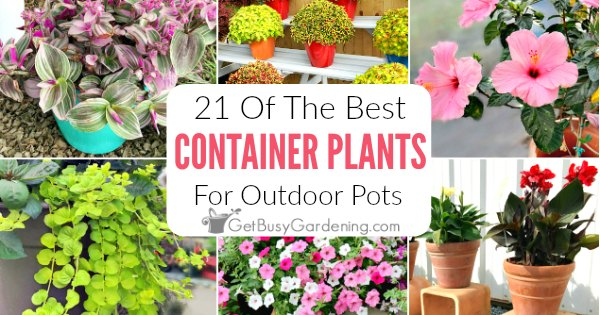 21 Best Container Plants For Pots Outdoors Get Busy Gardening