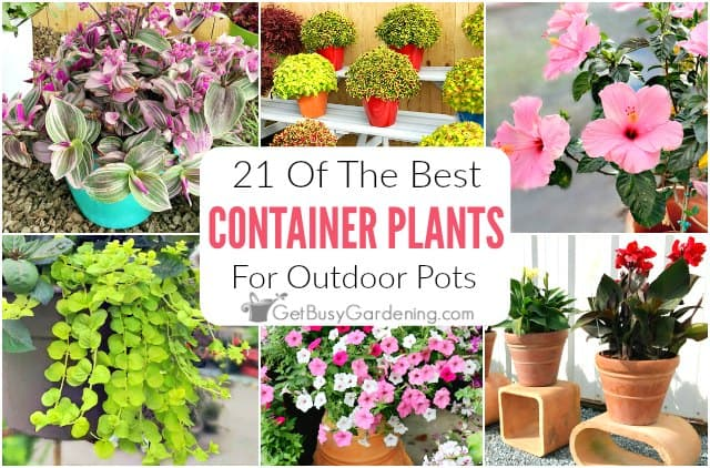 21 Best Container Plants For Outdoor Pots
