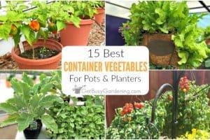 15 Best Container Vegetables For Pots & Planters
