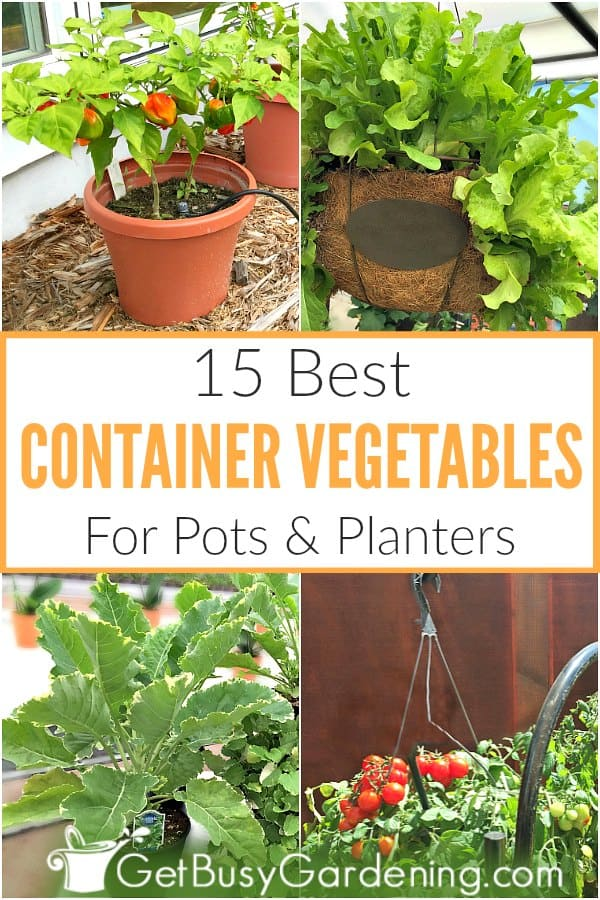 Container gardening is a great option for people who don't have a backyard plot. Growing vegetables in small spaces, like on balconies, patios or decks can yield the same amount of food as a traditional garden. Figuring out which veggies to grow in containers should be simple and fun! Get tips for how to choose the best vegetables for pots, hanging baskets, window boxes and planters. Plus a list of my top picks (tomatoes, kale, lettuce, spinach, and much more!).