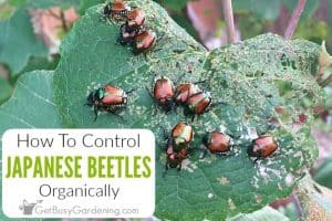 How To Get Rid Of Spider Mites On Houseplants, For Good
