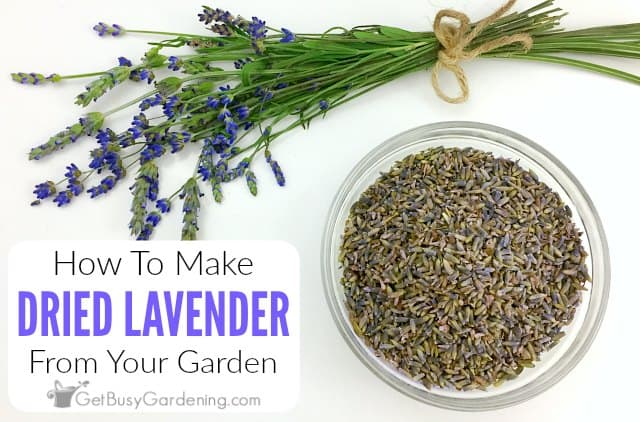 How To Dry Lavender From Your Garden