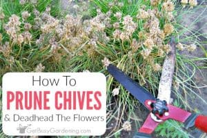 How To Prune Chives & Deadhead The Flowers