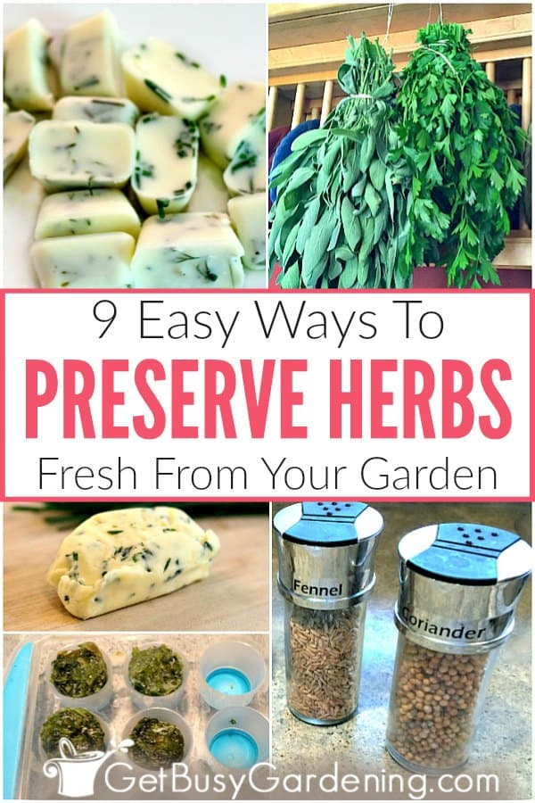 9 Easy Ways To Preserve Herbs Fresh From Your Garden