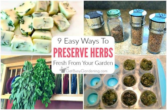 9 Easy Ways To Preserve Fresh Garden Herbs