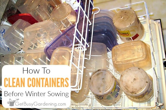 How To Clean Winter Sowing Containers