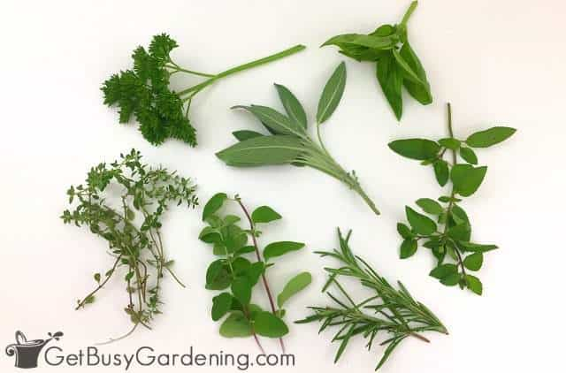 Different herbs harvested from my garden
