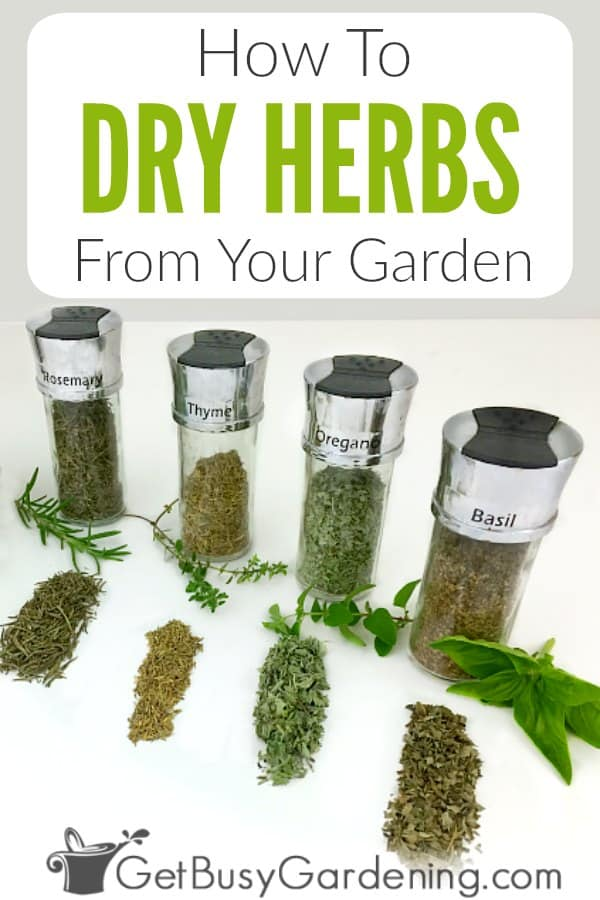 Drying herbs is easy, and there are many uses for them, like for tea, cooking, or filling your spice rack. Learn all about how to dry garden fresh herbs, and the best types to use including basil, oregano, parsley, dill, sage, mint, rosemary, and many more! Plus get step-by-step instructions for six different DIY methods to try in your kitchen (hanging bundles, using an air-drying rack, paper bags, drying in the oven, microwave, dehydrator..etc), and storage tips too.
