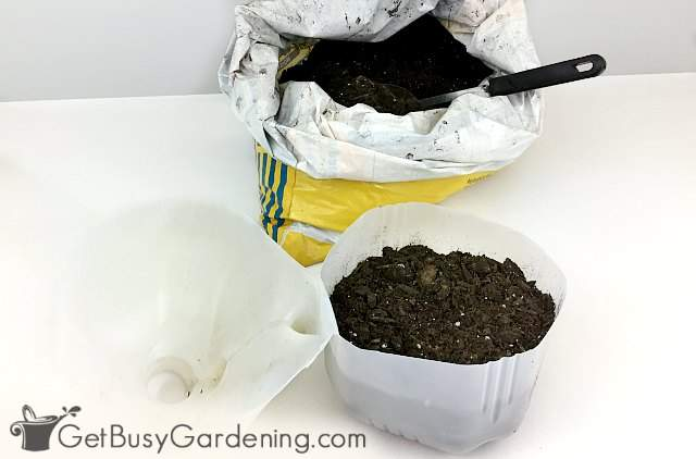 Filling a milk jug with soil