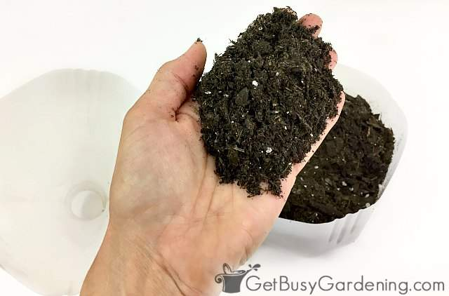 Filling container with potting soil