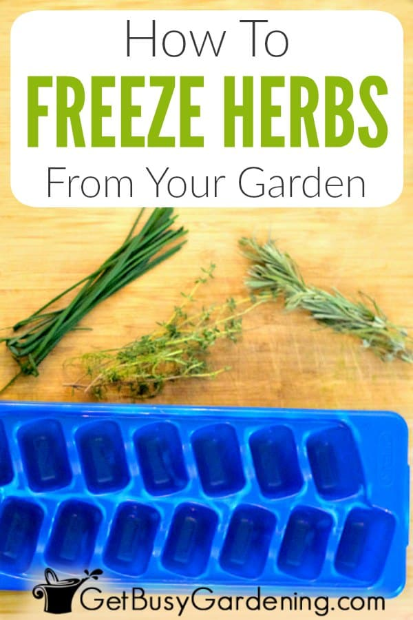 How To Freeze Herbs Fresh From The Garden