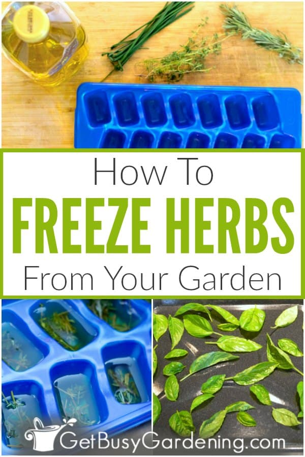 How To Freeze Herbs From Your Garden