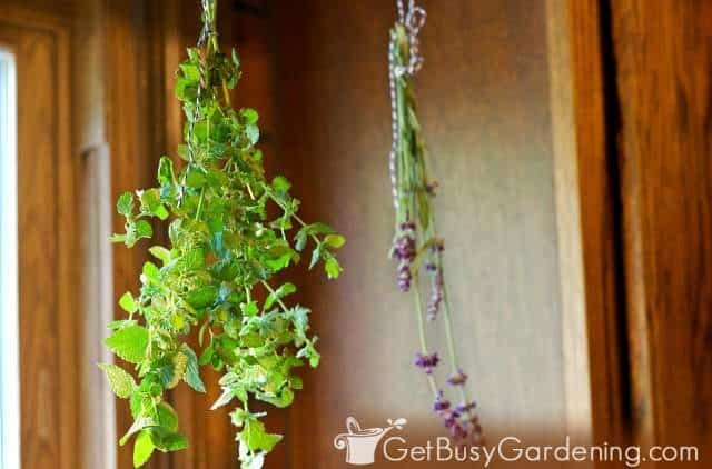 Herb bundles hanging upside down