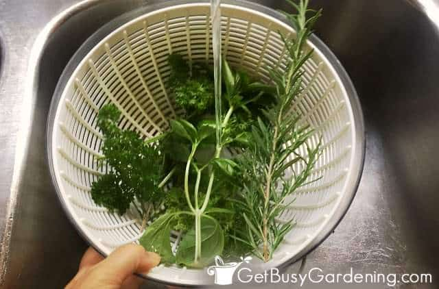 Washing herbs before freezing